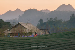 _Y2U0984.0118.Pa Khen.Tân Lập.Mộc Châu.Sơn La (hoanglongphoto) Tags: asia asian vietnam northvietnam northwestvietnam landscape scenery vietnamlandscape vietnamscenery vietnamscene mocchaulandscape sunset village house home mountain flanksmountain hillside teahill sky redsky people girl scenerywithpeople canon canoneos1dx canonef70200mmf28lisiiusm tâybắc sơnla mộcchâu pakhen phongcảnh bảnlàng hoànghôn bầutrời bầutrờimàuđỏ núi dãynúi sườnnúi ngôinhà sườnđồi đồichè người phongcảnhcóngười côgái hoànghônmộcchâu