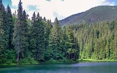 Synevyr lake (kud4ipad) Tags: 2017 synevyr ukraine zakarpattia lake landscape mountain tree water