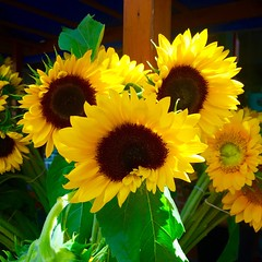 Let there be sun! (krys.mcmeekin) Tags: summer bouquet yellow flowers sunflowers