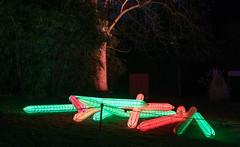 Parkleuchten 2018  -12 (Franiko Foto) Tags: gruga park essen parkleuchten licht farbe