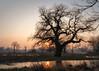 Rogalin 02-2018 #17 (Krzysztof Krr) Tags: sony a6000 nex selp18105g tree trees winter sunset rogalin rogalinek rogalińskiparkkrajobrazowy
