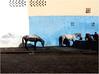ABREUVOIR (nouredine) Tags: maroc essaouira quartierindustriel cheveaux horses abreuvoir wateringplace pferdetränke nouredine explore