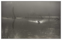 Ducks in the mist - explore 12.1.18 thanks! (Jo Evans1 - off and on for a while) Tags: national botanic gardens wales llanarthne misty atmospheric lake trees reflections ducks