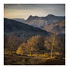 Last Light (K.R.Photography) Tags: sony a7ii lake district cumbria landscape trees langdale holme fell pikes