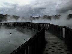 Bridge geyser (Cris_Pliego) Tags: matamata hobbiton thelordoftherings newzealand volcanic magic bridge smoke rotorua geyser geothermal travel backpacking roadtrip maori shadows