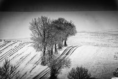 Strasse_DSC08116_SW (eulel) Tags: sw holthausen niedersorpe schmallenberg sauerland winter schnee weg bäume