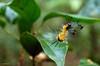 Miniaturita (Mafe Ramirez) Tags: selva insecto naturaleza detalle verde maferamirez