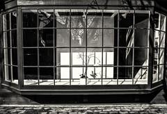 Winter Gallery (PAJ880) Tags: gallery closed offseason bw mono provincetown ma cape cod