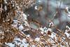samsebeskazal-5926.jpg (samsebeskazal) Tags: winter newjersey ringwood