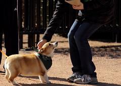 Dog Days '18, Morton Arboretum. 1 (EOS) (Mega-Magpie) Tags: canon eos 60d outdoors the morton arboretum lisle dupage il illinois usa america dog pet puppy cute