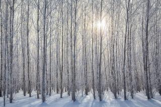 Winter's Lifeless World
