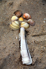 Playing With Shells (Worthing Wanderer) Tags: norfolk summer sunny farmland coast seaside nelson holkham burnham hero august