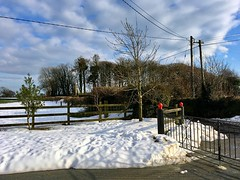 Snow, snow go away come again another day (JulieK (thanks for 6 million views)) Tags: htt telegraphpole wires trees fence gate snow rookery winter stormemma hff treemendoustuesday wexford ireland irish outdoor iphonese 2018onephotoeachday