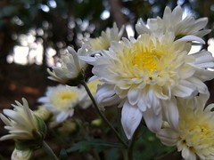 Very beautiful flower (Abraham Jacob N) Tags: flower beautifulflowernaturekottayamkerala india