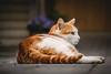 Time spent with cats is never wasted (preze) Tags: kater cat hauskatze kitty tomcat male feline pet outdoor haustier katze tier animal housecat