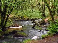 Cornish Stream (saxonfenken) Tags: 7332river 7332 stream woodlandstream challengeyouwinner perpetual thumbsup gamewinner