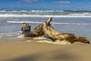 Ostsee  (18) (berndtolksdorf1) Tags: deutschland mecklenburgvorpommern ostsee weststrand dars wasser baumstamm holz strand sand outdoor
