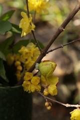 180124016 (murbozero) Tags: murbo japan flower