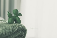 GREEN is a state of mind (pierfrancescacasadio) Tags: febbraio2018 verde lifeisarainbow 50mm green greenisastateofmind lightgreen hss slidersunday dog toy 04032018840a5395