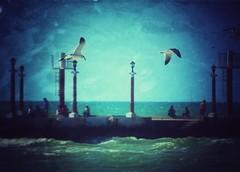 The bluest sky (Mister Blur) Tags: dock muelle sisal yucatán méxico seagulls flying depthoffield better things bluest sky gaviotas vuelo cielo azul snapseed nikon d7100 f56