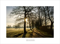 where it all started (Zino2009 (bob van den berg)) Tags: sonya200 walkoffame walking morning winter backlight endless perspective path road forest towards farm land flat holland cold shades long weather sunny light sunlight silhouettes dutch branches clear view meadow zino2009 close januari 2010