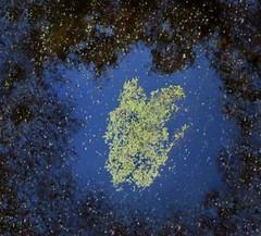 nebula (Edinburgh Nette ...) Tags: reflections ponds abstract duckweed water abstracs haiku maohaiku