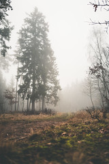Relaxation (mripp) Tags: retro old vintage foggy fog rebel wetter weather wald forest tree baum entspannung relaxation leica q