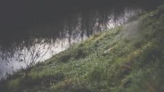 PB_012618_07 (losing.today) Tags: brianyoung oregon pacificnorthwest portland pdx portlandoregon portlandor winter nature outdoors naturepark plantlife plants moodyseason darkseason losingtoday grass grassstudies