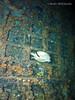 bvi 17 P8312359 (Pauline Walsh Jacobson) Tags: underwater scuba dive diving bvi water ocean sea coral reef marine life reptile wideangle