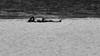 Sunbaker (Leon Sammartino) Tags: sun baker monochrome beach fujfilm port melbourne australia speedos