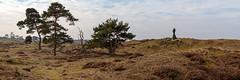 _Z1A3354 (doevos) Tags: gelderland hogeveluwe npdhv nationaalparkdehogeveluwe veluwe wandelfit