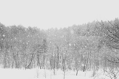 To keep on flying powdery snow._A9_7987 (nabe121) Tags: sony α9 ilce9 fe emount sonyalpha sigma 24mm70mm f28 dg os hsm art a017 samount silkypixdeveloperstudiopro8 mc11