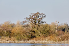 Marsh Lane Nature Reserve 25th February 2018 (boddle (Steve Hart)) Tags: stevestevenhartcoventryunitedkingdomcanon5d4 marsh lane nature reserve 25th february 2018 steve hart boddle steven bruce wyke road wyken coventry united kingdon england great britain canon 5d mk4 100400mm is usm ii wild wilds wildlife life natural bird birds flowers flower fungii fungus insect insects spiders butterfly moth butterflies moths creepy crawley winter spring summer autumn seasons sunset weather sun sky cloud clouds panoramic landscape hamptoninarden unitedkingdom gb