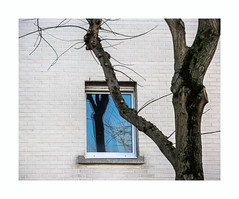 The cold song (hélène chantemerle) Tags: mur fenêtre arbre tronc reflet noir blanc bleu wall window tree trunk reflection black white blue