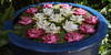 Water lotus (Thomas Mulchi) Tags: pathumwandistrict bangkok thailand 2018 jimthompsonhouse plants lotusflowers waterlotus waterlotusflower pot flowerpot krungthepmahanakhon th 12 flowers waterflowers