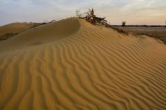 La duna. (Victoria.....a secas.) Tags: africa sáhara chad duna dune