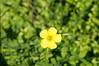 Ψίνθος (Psinthos.Net) Tags: ψίνθοσ psinthos ιανουάριοσ γενάρησ january winter χειμώνασ φύση εξοχή nature countryside afternoon απόγευμα απόγευμαχειμώνα χειμωνιάτικοαπόγευμα λουλούδια άγριαλουλούδια αγριολούλουδα wildflowers yellowflowers κίτριναλουλούδια χόρτα greens pollen γύρη field χωράφι οξαλίδεσ οξαλίδα sorrels sorrel ξυνιέσ ξινιέσ ξινάκια ξυνάκια ηλιόλουστημέρα sunnyday