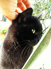 Un micione  coccoloso con gli sconosciuti 🐾😍😻😍 #gattonero #blackcats #picohtheday #instacats #lovecats #photography #instagood #catsofinstagram #tumblr #quote #purr #fusa #coccole #love #amore #instagram #go (Massimiliano Antipatico Chiti) Tags: gattonero lovecats photography meow goodnight catsofinstagram amore miao sweet purr instagood love quote feel instagram blackcats buonanotte coccole followme fusa tumblr instacats picohtheday