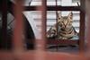 Where's the cat?|巷裡尋貓 (里卡豆) Tags: 嘉義 臺灣省 台灣 tw olympus penf 45mm f12 pro olympus45mmf12pro taiwan cat 喵 貓 喵星人