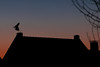 Reiher fliegt vom Dach (dhmertens) Tags: reiher canon 70d ef100mm f28l