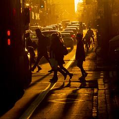 Crossing Bloor (jer1961) Tags: toronto sunset longlight dusk bloorstreet crosswalk theannex