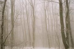 (szmenazsófi) Tags: smenasymbol smena lomo analog analogue film 35mm agfa forest wood trees tree mist fog foggy misty winter wintty cserhát magyarország kéktúra országoskéktúra outdoor landscape nature explored inexplore