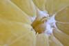 Citrus (Fabio Polimadei) Tags: citrus macromondays lemon fruit macro food micronikkor105mm stilllife