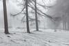 Floating (David Ball Landscape Photography) Tags: snow storm winter winterwonderland landscape landscapes photography outdoors travel trees tree canon nature woodland wood woods fog mist forest weather cold tones wwwdavidballphotographycouk davidballlandscapephotography 2018 greatbritain