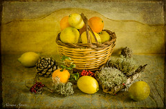 16 gennaio 2018 (adrianaaprati) Tags: stilllife lemons oranges lichens berries colors red yellow leaves pinecones january 2018 composition inside home basket wicker textured lenabemannaj fruits