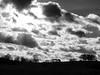 Black & White Landscape Waltham Abbey Essex (cocabeenslinky) Tags: black white landscape upshire waltham abbey essex blackandwhite blackwhite photos photography art panasonic lumix dmcg6 ©cocabeenslinky nature natural world outdoors wildlife wild life flora fauna florafauna january 2018 england uk essexlife