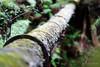 20180114-05-Pipeline track (Roger T Wong) Tags: 2018 australia hobart mtwellington pipelinetrack rogertwong sel85f18z sony85mmf18 sonya7ii sonyalpha7ii sonyfe85mmf18 sonyilce7m2 tasmania green moss outdoors pipeline walk