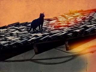 Una gata sobre el tejado caliente