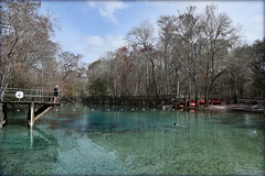 Florida's Newest State Park - Gilchrest Blue Springs State Park (gatorgalpics) Tags: gilchristbluespringsstatepark floridasneweststatepark february92018 secondmagnitudespring floridasprings florida therealflorida explore226
