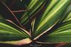 Colour Explosion (Ben Powell Photo) Tags: macro eden project cornwall par bodmin staustell plants flowers leaf leaves nikon d750 photographer photography fleur upclose close up closeup beautiful colourful colours depth field nature natural wildlife blossom pretty